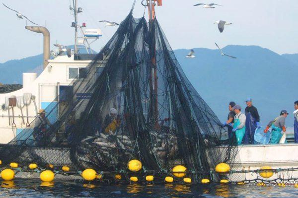 후카우라마치(시라카미 바다에서 어부체험)