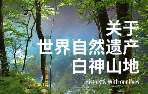 History and lives of Shirakami Sanchi