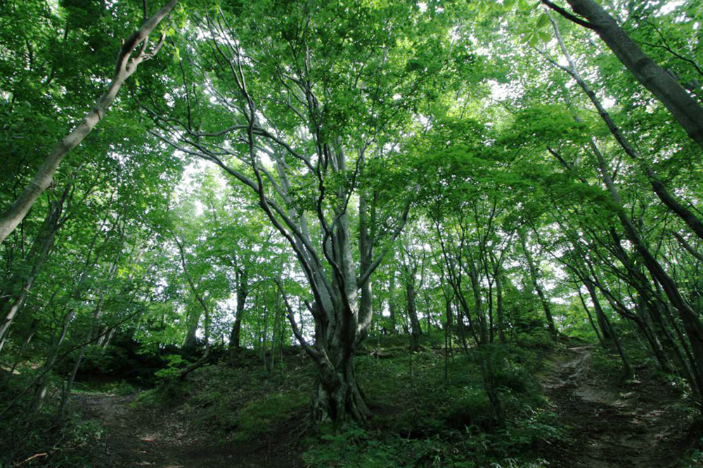 Set your sights on Mount Shirakami (1,235m), the central peak of the Shirakami mountain range, and start climbing!
