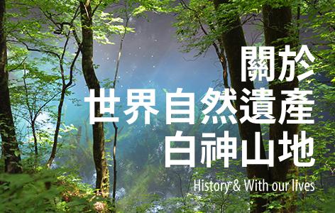 有關世界自然遺產白神山地