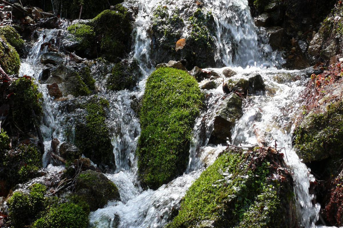 Walk the Beech Forest Trail