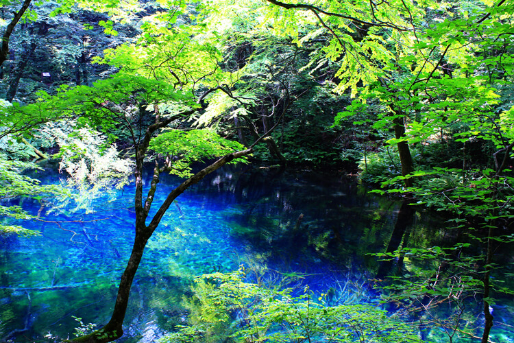 "It's like CG! A pure blue pond in Aomori ""Aoike"" is super mysterious!"