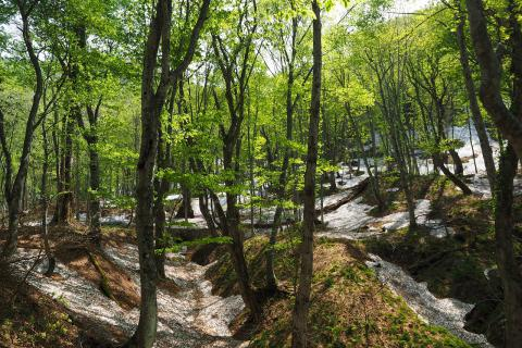 "Hiking the ""World Heritage Beech Forest Trail"" (Spring/Summer/Autumn Program)"