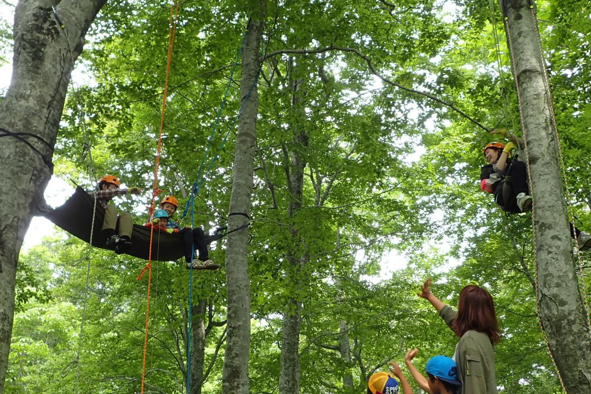 Tree Climbing in the Beech Forest